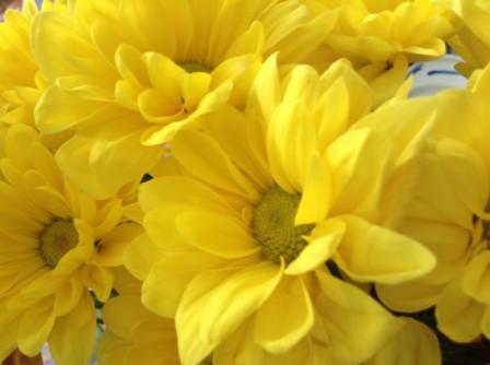 yellow_flowers.jpg
